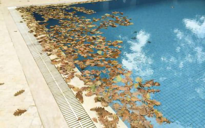 piscina-llena-de-hojas-en-otono